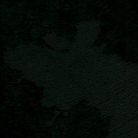 Festivale - Crawford Black