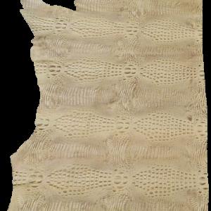 ANIMAL KINGDOM - DESERT TORTOISE