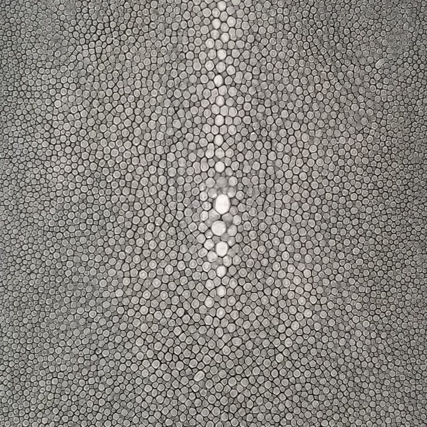 SHAGREEN STINGRAY - GRIS