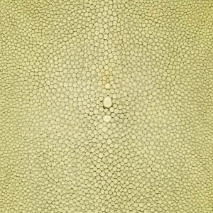 SHAGREEN STINGRAY - JADE