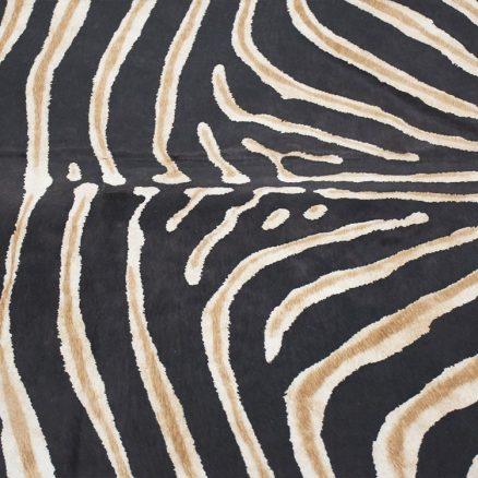 Wild Life – Realistic Zebra